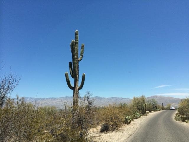 saguaro7